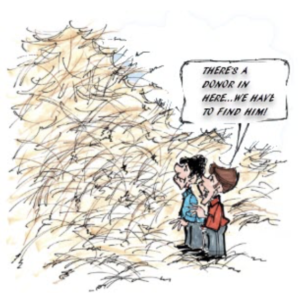 cartoon of two people looking at a pile of hay saying 'there is a donor in here, we have to find him'