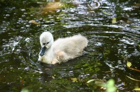 pastor-resources-ugly-duckling-theology