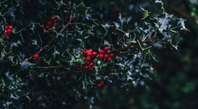 pastor-resources-christmas