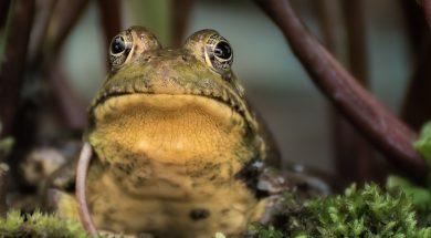 pastor-resources-frog