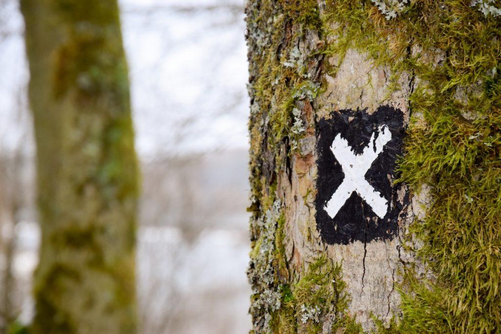 Ignorance tree with x